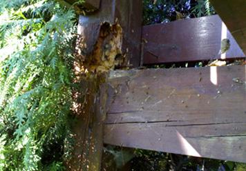 Schaden durch ungenuegenden konstruktiven Holzschutz.jpg
